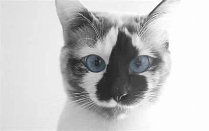 Cat Funny Face Wallpapers Desktop 4k