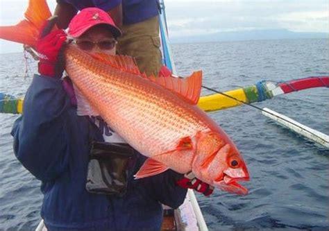 Boat Trips From Sanur by Bali Fishing Trips Bali Adventure