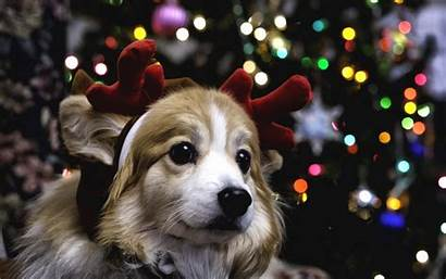 Puppy Christmas Dog Wallpapersafari Widescreen Desktop Computer
