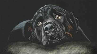 4k Dog Breed Rottweiler Ultra Wallpapers 2160