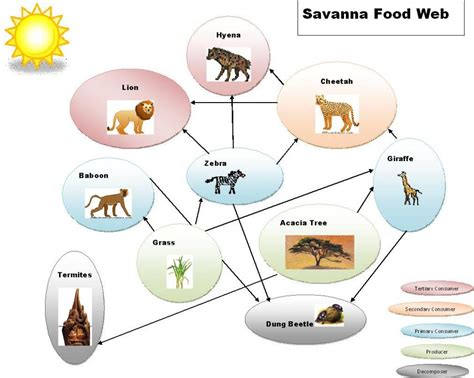 web cuisine savanna biome images let 39 s learn biomes