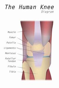 Everything You Need To Know About Patella Alta