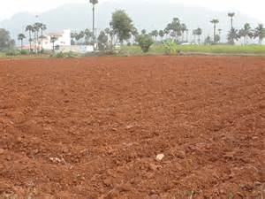 Red Soil Crops
