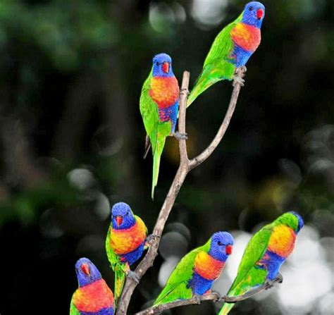 colorful picture colorful parrot birds images photos wallpapers