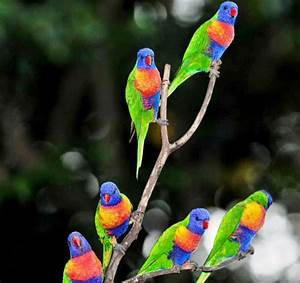 Colorful Parrot Birds Images, Photos Wallpapers Download
