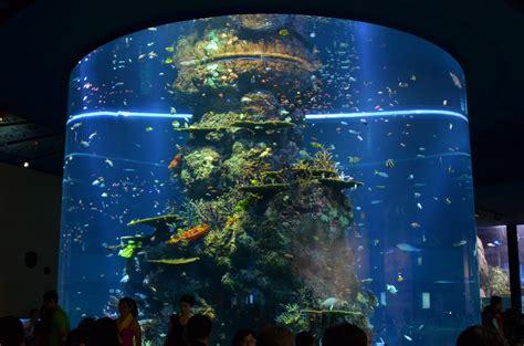 Led Aquarium Lighting - Democraciaejustica
