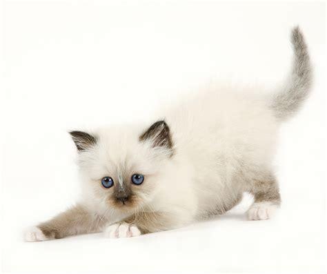 l arriv 233 e d un animal 224 la maison accueillir un chiot ou un chaton