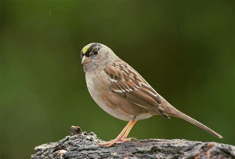 Birds January 2011