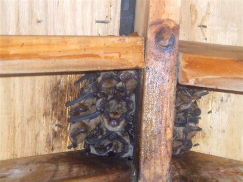 one way bat door bat door that u0027s a one way bat door at least we
