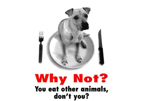 Animal Rights Wallpaper - animal rights images animal rights wallpaper and