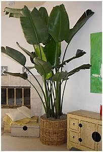 Große Pflanzen Fürs Wohnzimmer : zimmerpflanzen bilder gem tliche deko ideen mit ~ Michelbontemps.com Haus und Dekorationen