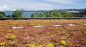 Extensive Dachbegrünung Pflanzen : extensive dachbegr nung mit sedum garten dach garten dachbegr nung und garten ideen ~ Frokenaadalensverden.com Haus und Dekorationen