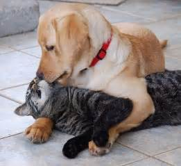 cat and dogs cats and dogs living together pet attack