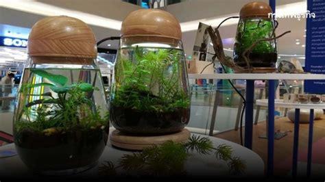 สวนไม้น้ำในโหลแก้ว เฟอร์นิเจอร์มีชีวิตของชาวคอนโด