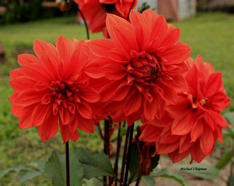 Margys Musings Flowers