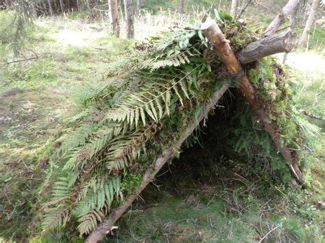 Rainforest Primitive Shelter