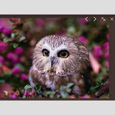 Jquery Plugin For Fullscreen Image Viewer  Chroma Gallery