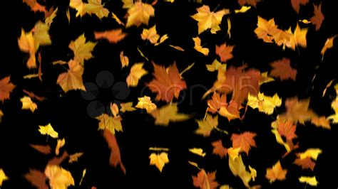 3d Falling Leaves Animated Wallpaper - falling leaves masked 3d animation loop clip 715062