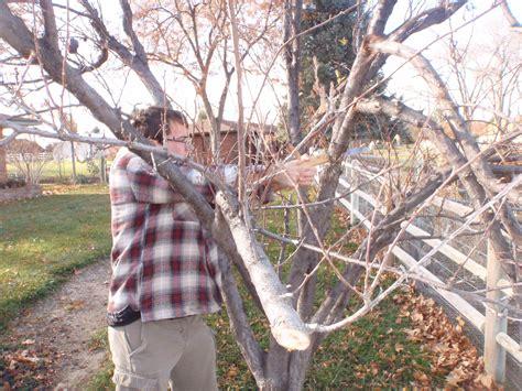 pruning apple trees in autumn pruning apple trees in autumn 28 images apples and pears winter pruning rhs gardening