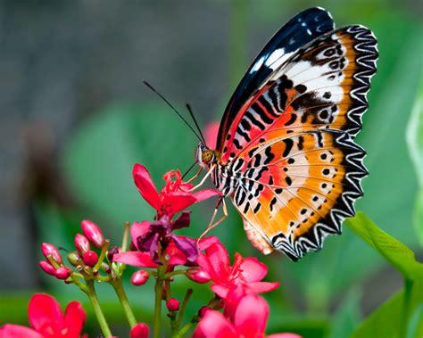 vlinders  je tuin landidee