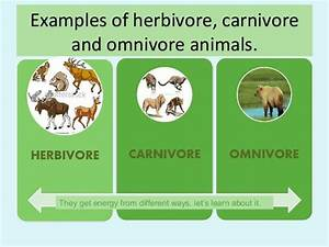 17+ images about herbivores, carnivores,omnivores on ...