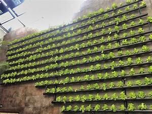 Huertos verticales La revolución de las lechugas colgantes Twenergy