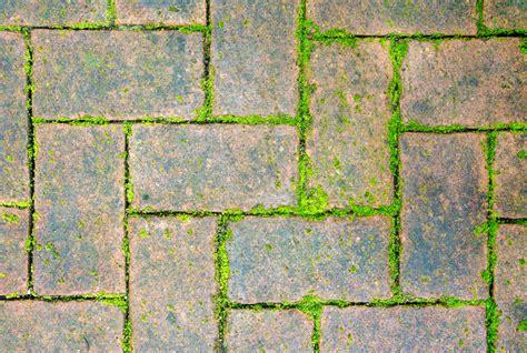 moos entfernen terrasse moos entfernen vom pflaster 187 so geht s am besten