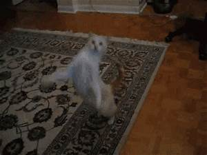 Cant Touch Dis GIFs - Find & Share on GIPHY