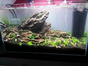 Co2 Rechner Aquarium : mein erstes aquascape flowgrow aquascape aquarium database ~ Orissabook.com Haus und Dekorationen
