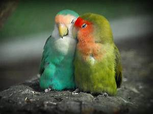 PicturesPool: Love Birds Wallpapers | Beautiful Birds Pictures