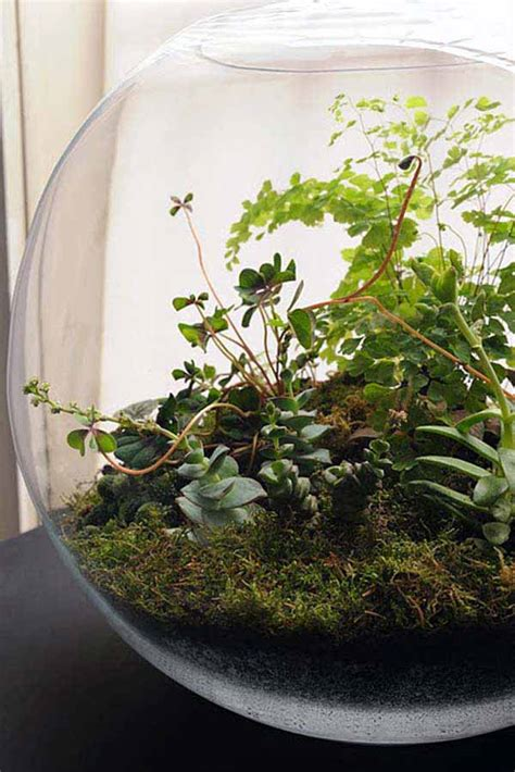 mini indoor garden ideas  green  home amazing