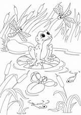 Pond Coloring Illustration Vector Dreamstime Dot Frog Ducks Water Slider sketch template