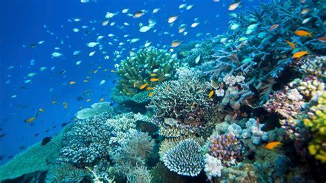Australia's Great Barrier Reef Is Not Dead...Yet | Condé Nast Traveler