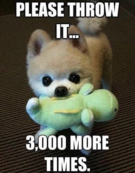 Cute Puppy Memes - cute fat puppy with quotes quotesgram