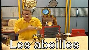 Comment Tuer Un Frelon : comment diff rencier une abeille une gu pe un frelon et un bourdon c 39 est pas sorcier youtube ~ Melissatoandfro.com Idées de Décoration