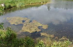 Algen Im Teich Entfernen : algen im teich entfernen ohne chemie f r klare verh ltnisse im gartenteich die besten tipps ~ Orissabook.com Haus und Dekorationen