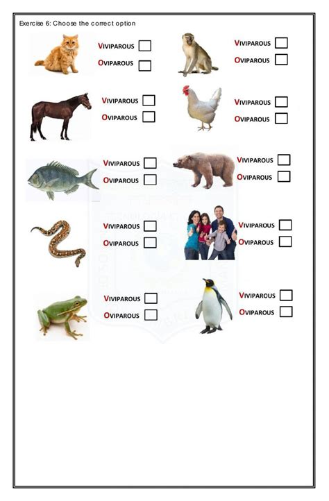 pop quiz animal  plant life cycle  term science