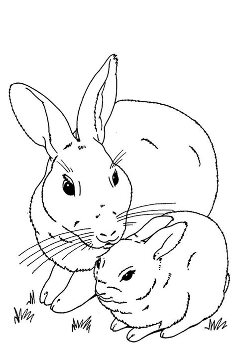 baby bunnies coloring pages   print
