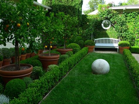 best backyard fruit trees best 25 hedges landscaping ideas on hedges