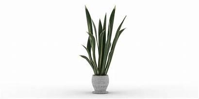 Plant Indoor Pack Blender Blendermarket Documentation Ratings