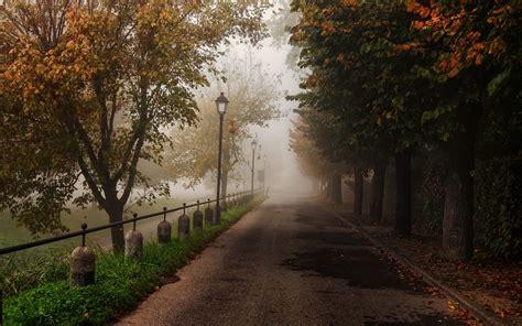 mystic road trees wallpapers mystic road trees stock
