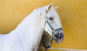 Geschirrspüler Kaufen Tipps : andalusier pferde kaufen tipps infos andalusien 360 ~ Lizthompson.info Haus und Dekorationen