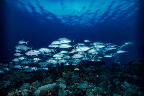 deep sea fish belize fishing hole