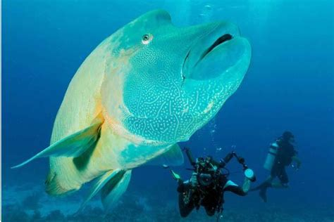 south china sea fish close  extinction livemint
