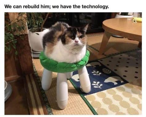 funny animal picture dump  pics