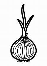 Bulb Plant Clip Onion Vector Illustrations Graphics Cartoons sketch template