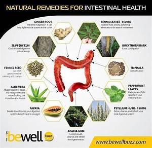 In The Natural Remedies For Intestinal Health I Have Found
