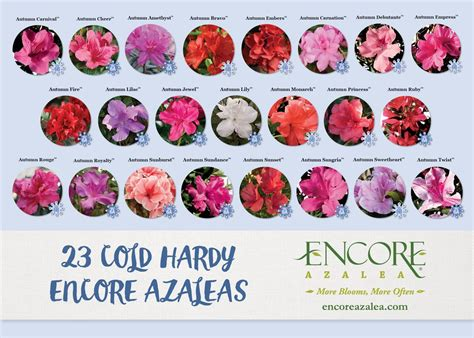 for more than 15 years encore azaleas been tested in