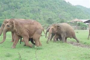 Heartwarming moment herd of elephants run to welcome new