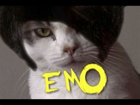 emo cats    cat emotions  moods youtube